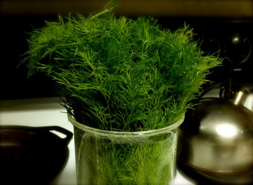 Dill is my favorite herb