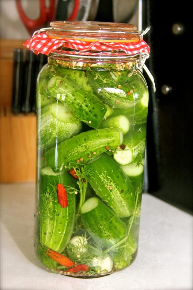 A freshly packed jar of pickling cucumbers in brine