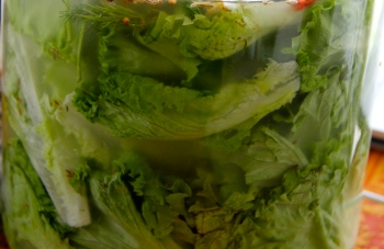 Pickled green-leaf lettuces
