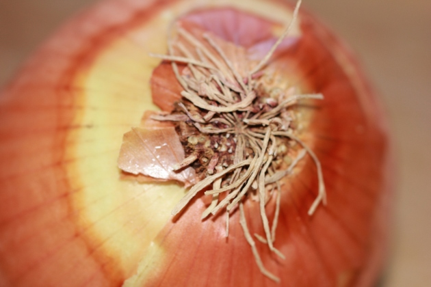 Gorgeous Organic Onion