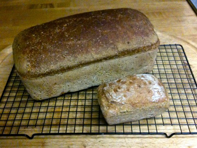 A grainy picture of my very first sourdough bread