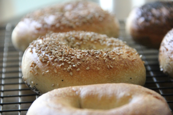 NY Style Bagels -- Wild Sourdough Version