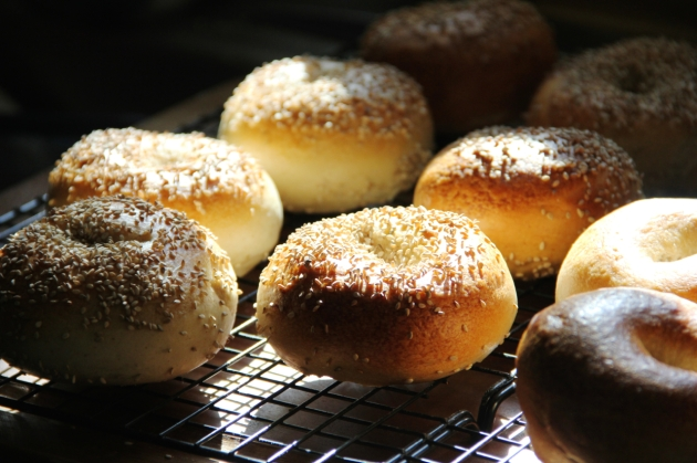 NY Style Sourdough Bagels